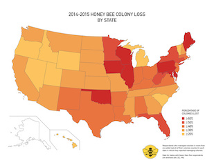 2014-2015 honey bee colony loss by state. Image: Bee Informed Partnership/University of Maryland/Loretta Kuo (Click image to download hi-res version.)