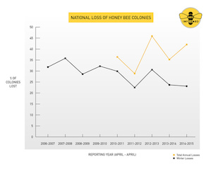 Nationwide annual honey bee colony losses. Image: Bee Informed Partnership/University of Maryland/Loretta Kuo (Click image to download hi-res version.)